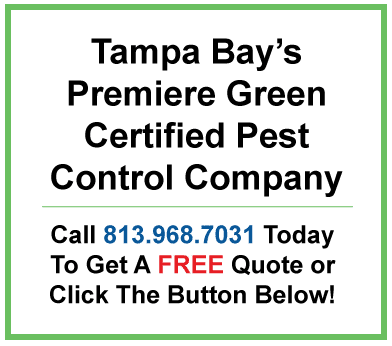 Call 813.968.7031 for a pest control quote