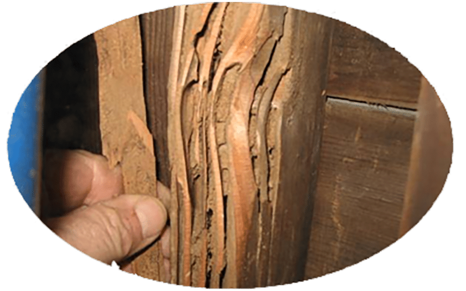 Nvirotect's Termite Services - Preventing Wood Damage