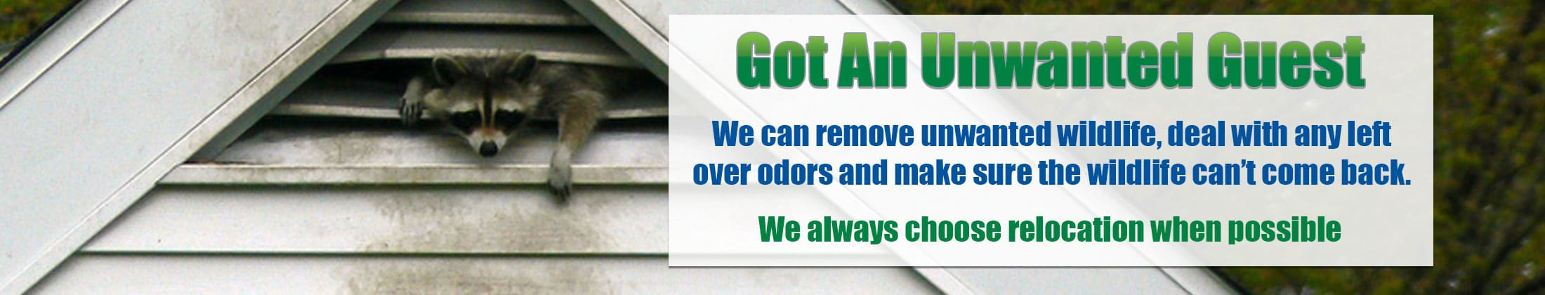 Pest and Wildlife Removal Company Florida