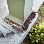 termite damage florida