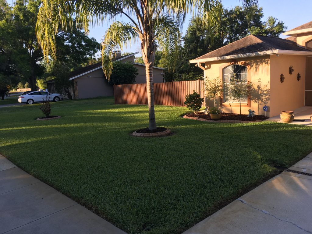 fertilized lush florida lawn