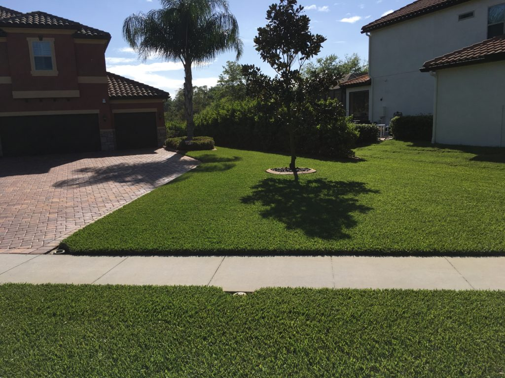 shrub care for lush florida lawn