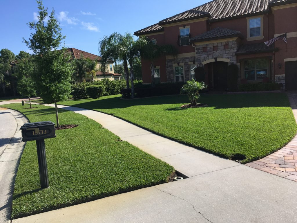 healthy florida lawn
