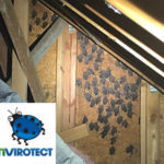 Get rid of bats in your attic
