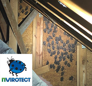 Get Rid Of Bats In Your Attic And Let